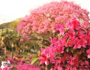flower-4-1-